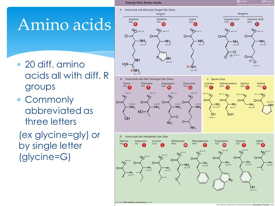 Chapter 24 proteins ppt download 5 amino thecheapjerseys Images