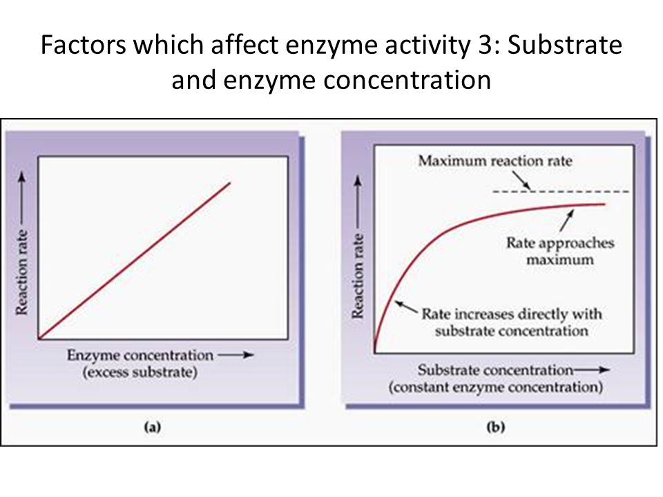 ib enzyme experiment Intestine, and will be the focus of this lab exercise the importance of enzymes in chemical digestion there are many different substances that are secreted.