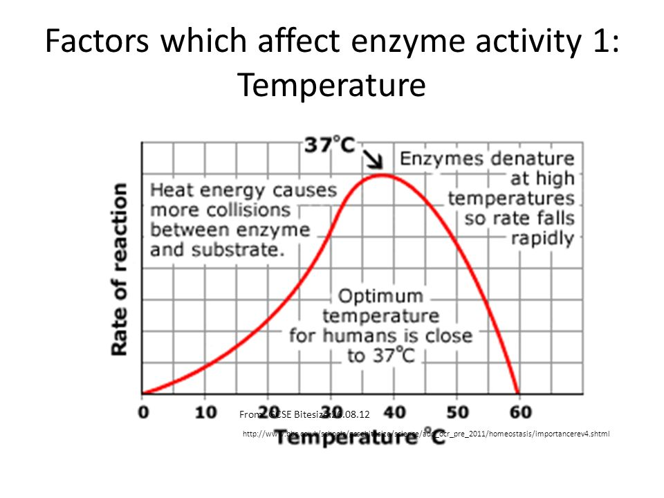 the effect temperature has on the activity of the enzyme