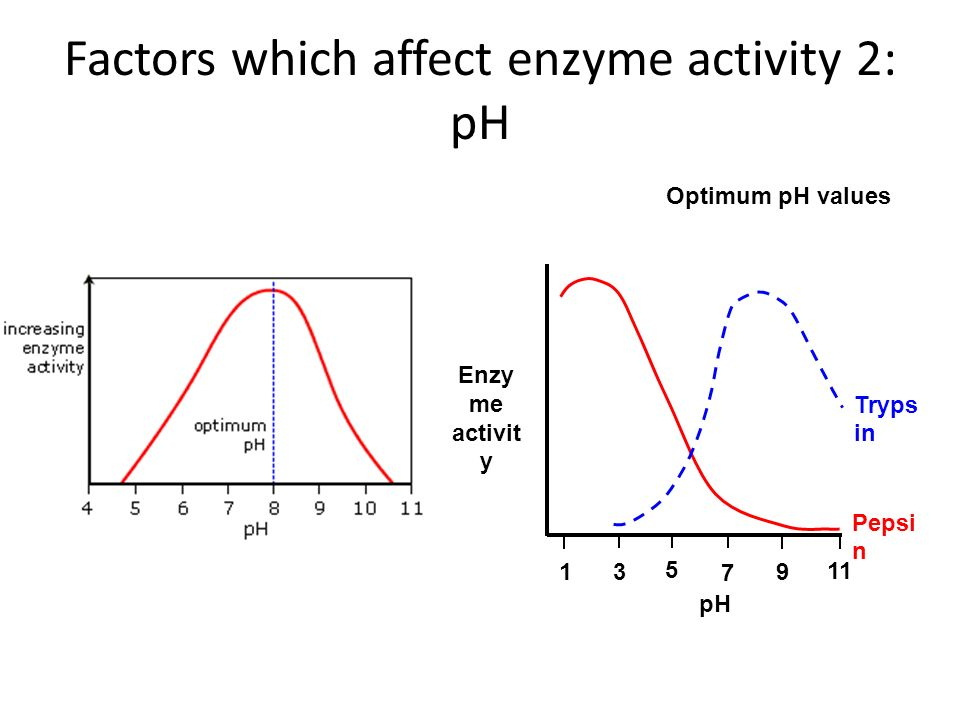 enzyme practical Assay of urease enzyme activity is one of the practical methods in enzymology  in this post providing free protocol for biochemistry practical lab purpose.
