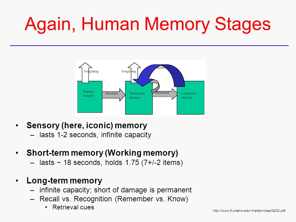 memory stages During this stage, alzheimer's disease is not detectable and no memory problems or other symptoms of dementia are evident stage 2: very mild decline the senior may notice minor memory problems or lose things around the house, although not to the point where the memory loss can easily be distinguished from normal age related memory.