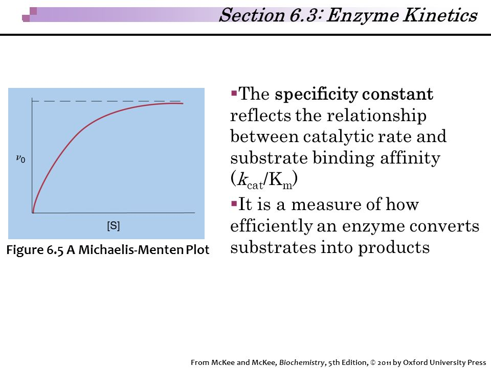 relationship between km and substrate concentration