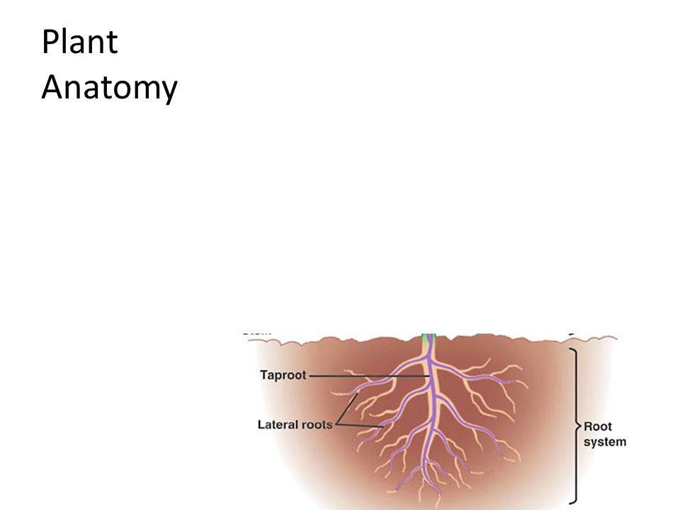 Amazing Introduction To Plant Anatomy Illustration - Image of ...
