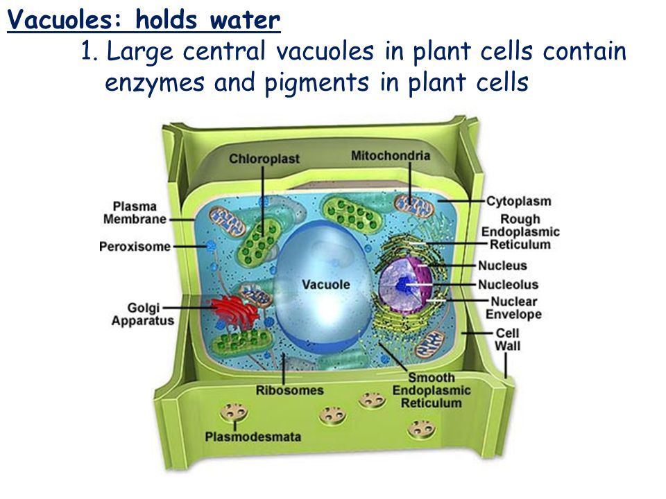 Cell Types and Cell Structure - ppt video online download