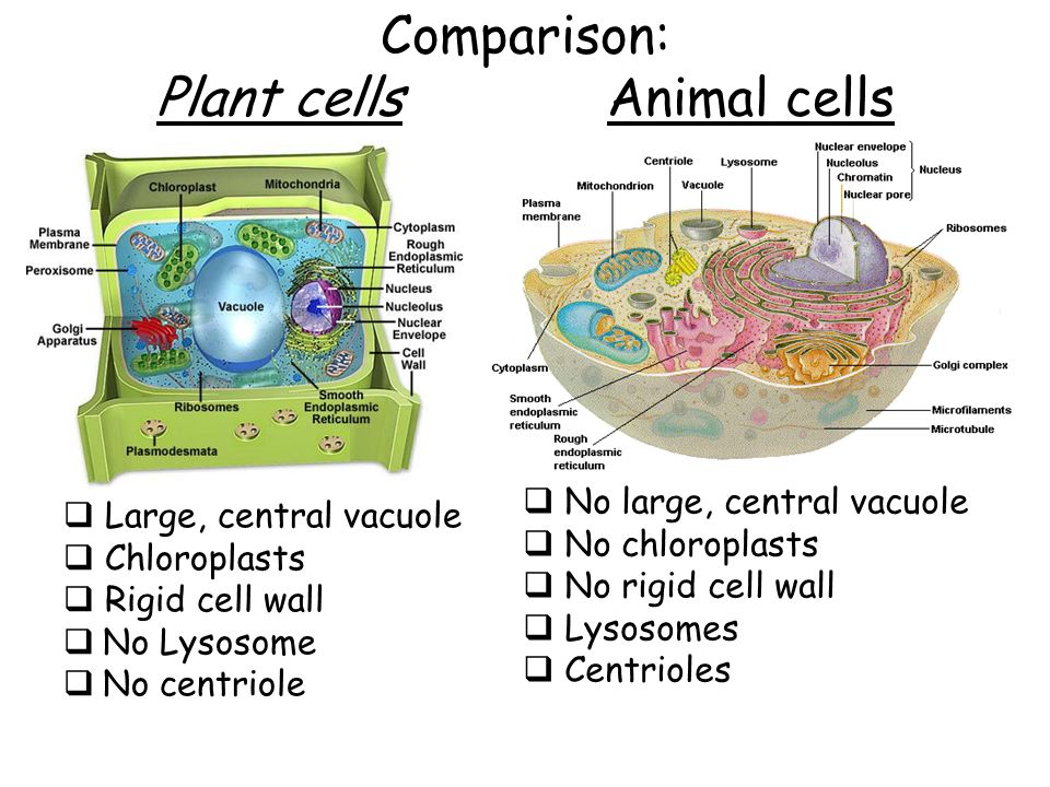 Cell Types And Cell Structure Ppt Video Online Download