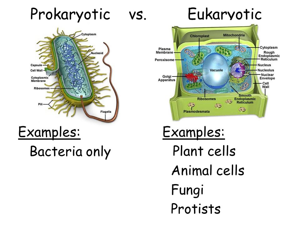 Lastly, we learned about prokaryotic and eukaryotic cells.