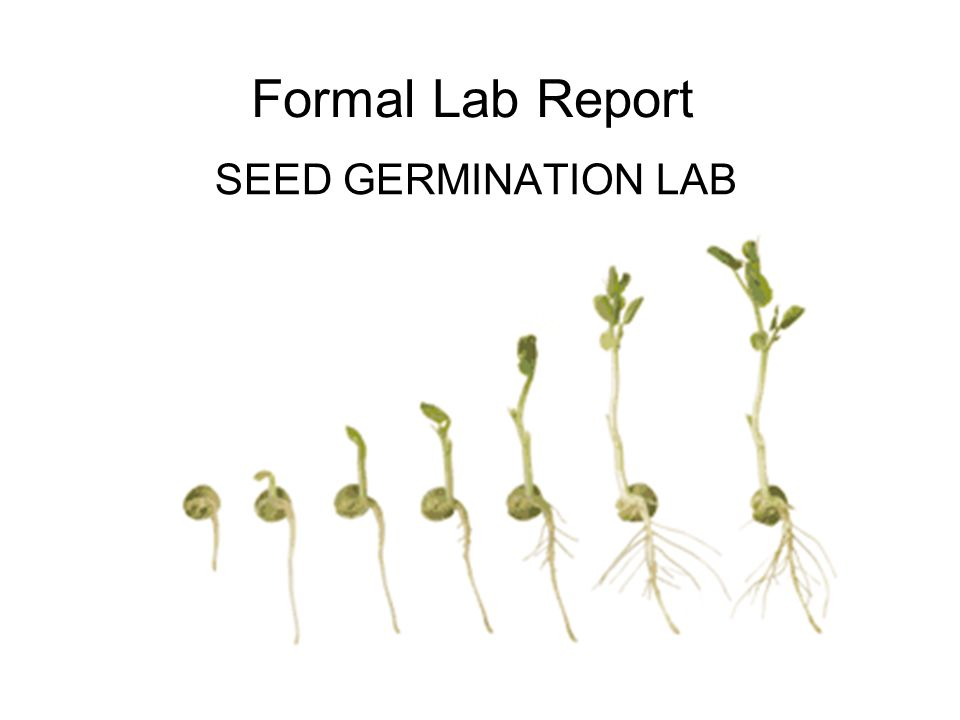 seed germination essay Seed germination eei  germination in plants is the process in which dormant seed begins to grow and sprout under certain growing conditions - seed germination eei introduction the english pea, also known as the garden pea, is a member of the legume family and is known to grow roughly three to four inches long.