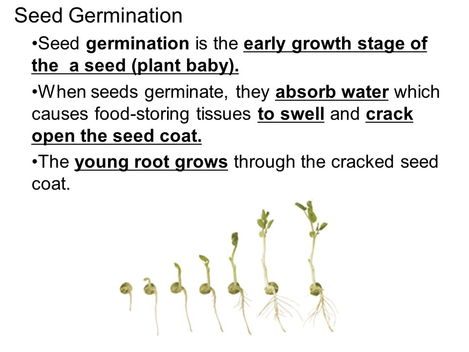 plant growth hormone lab report essay Reports check with your instructor or in your lab manual to make sure you   sunflower plants are exposed to and the amount of growth over a.