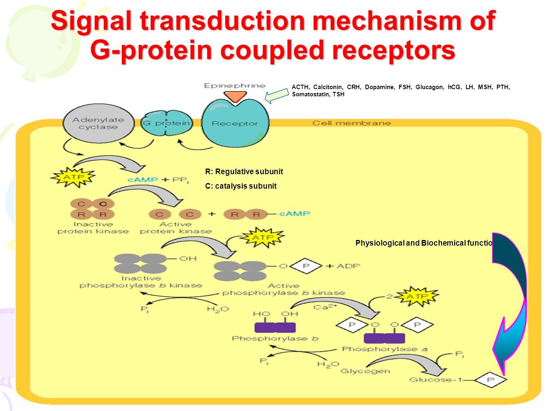 steroid hormone receptors animation