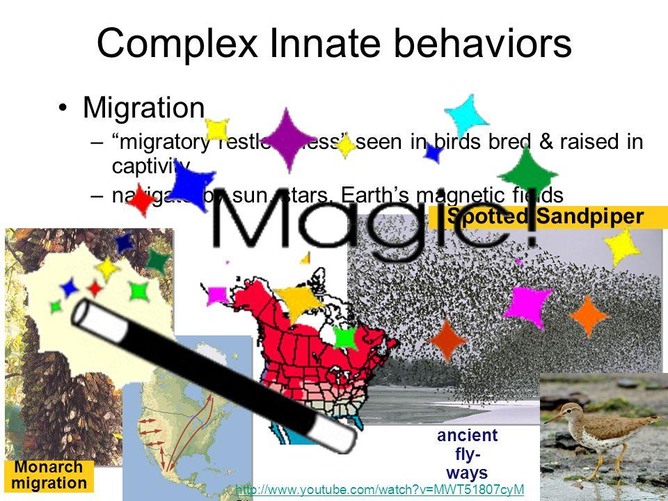 Complex Innate behaviors