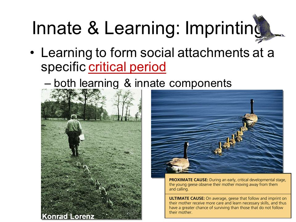 Innate & Learning: Imprinting