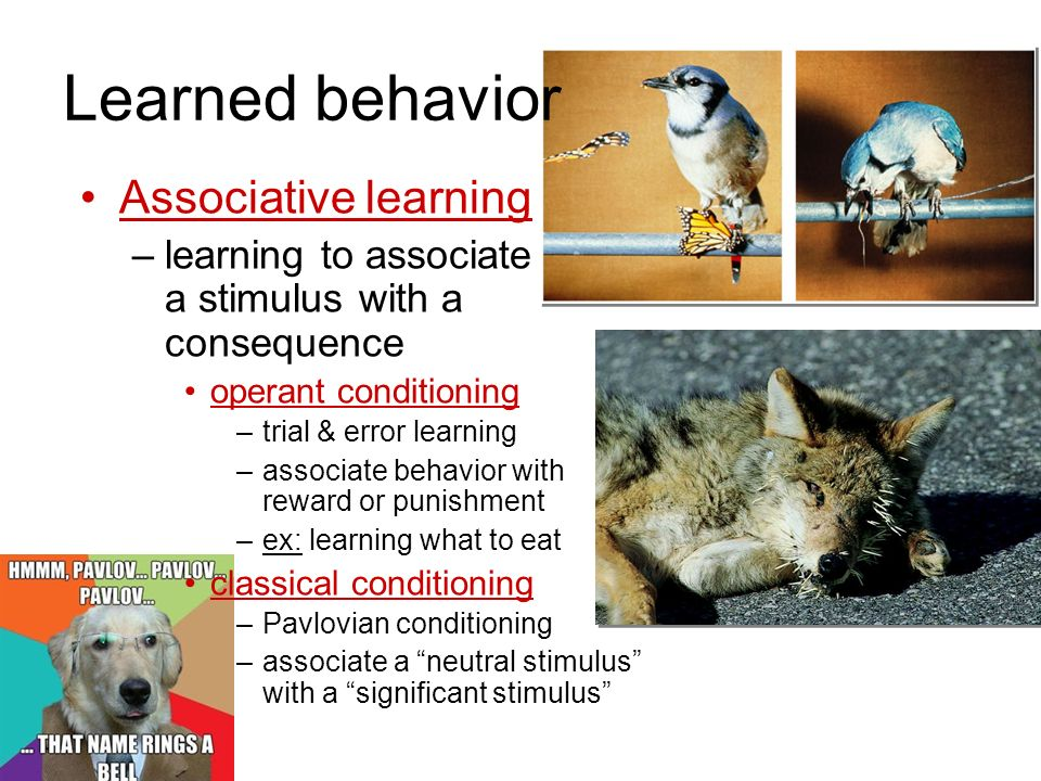 Learned behavior Associative learning