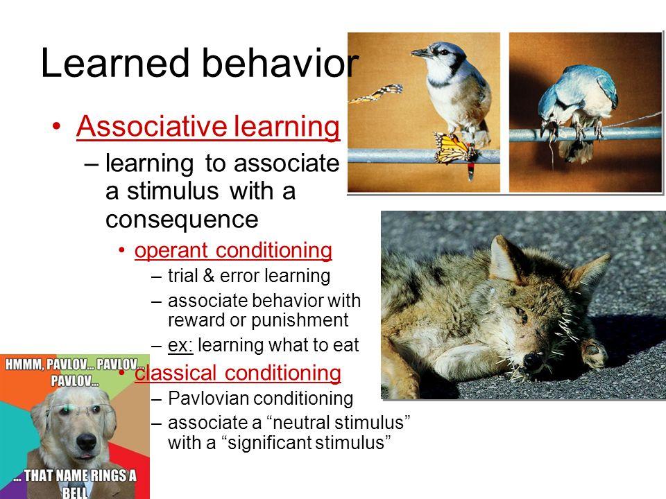 Learned behavior Associative learning