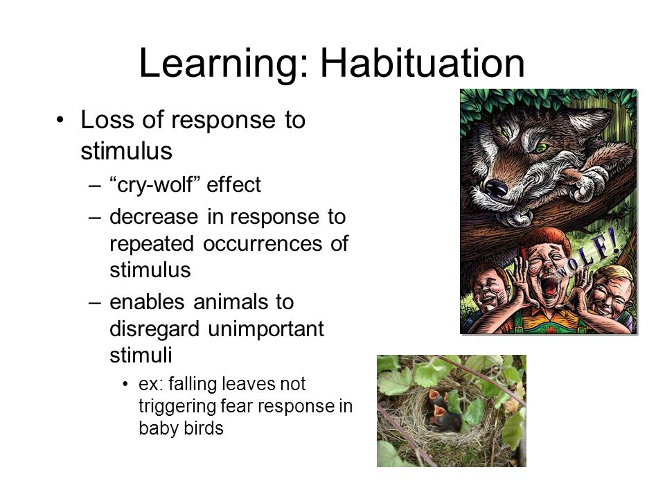 Learning: Habituation