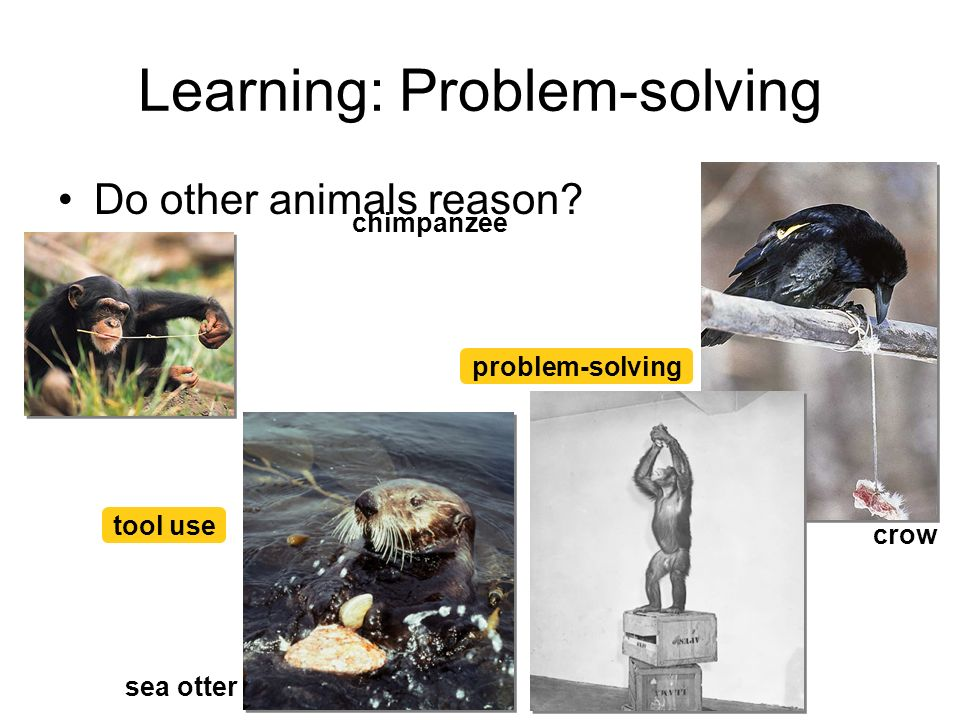 Learning: Problem-solving