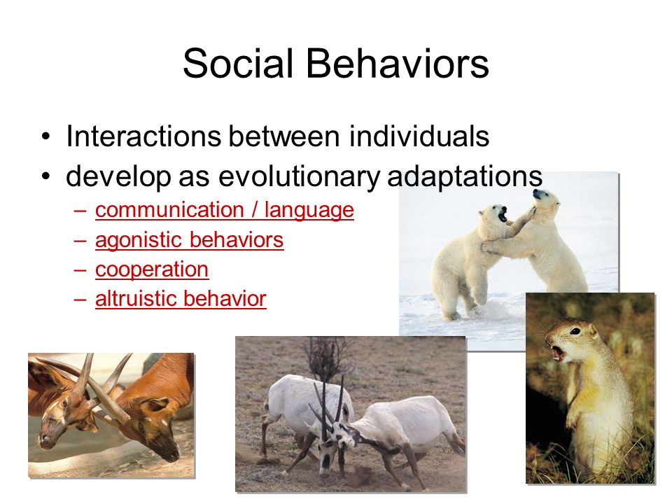 Social Behaviors Interactions between individuals