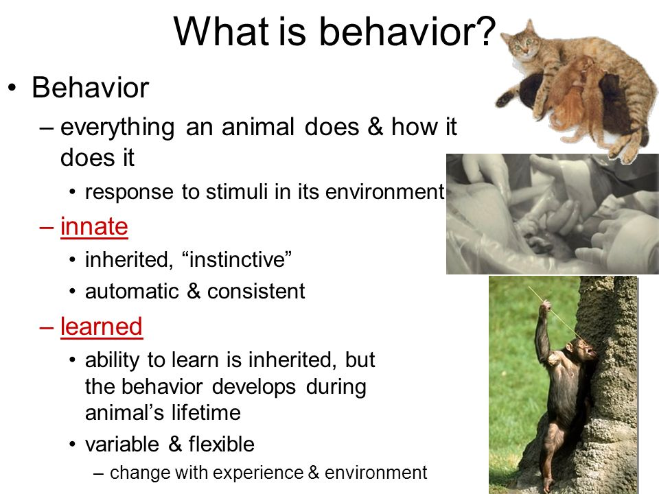 What is behavior Behavior everything an animal does & how it does it