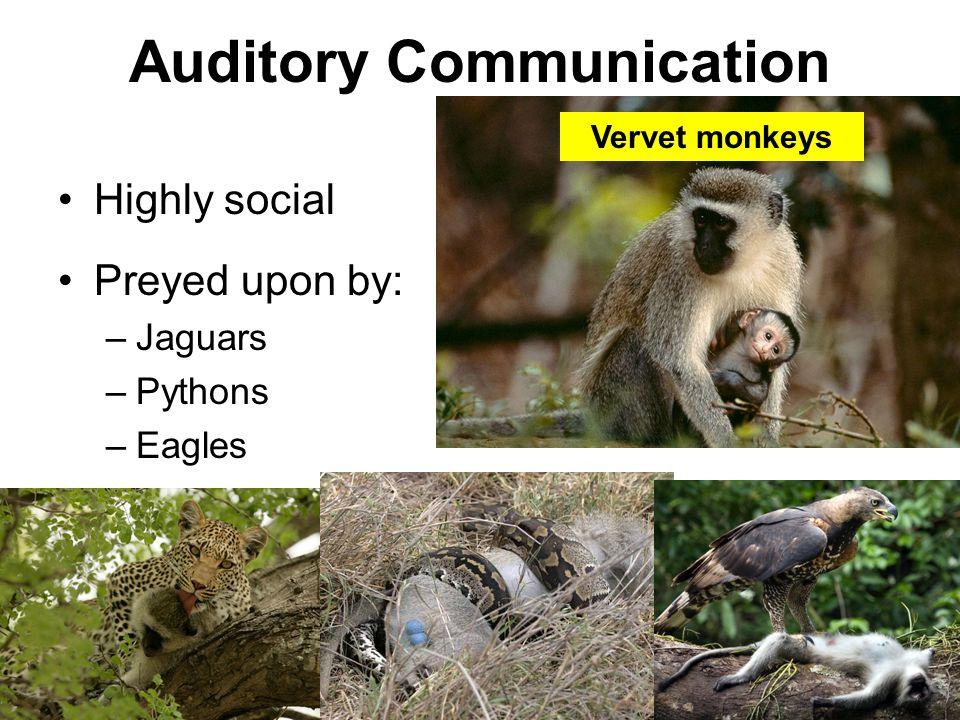 Auditory Communication