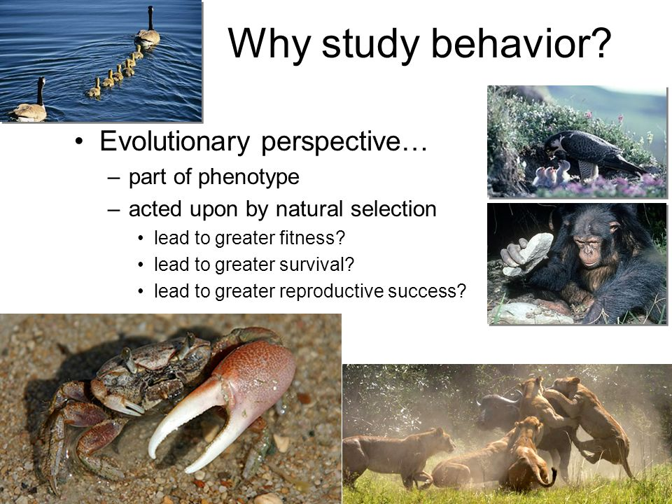 Why study behavior Evolutionary perspective… part of phenotype
