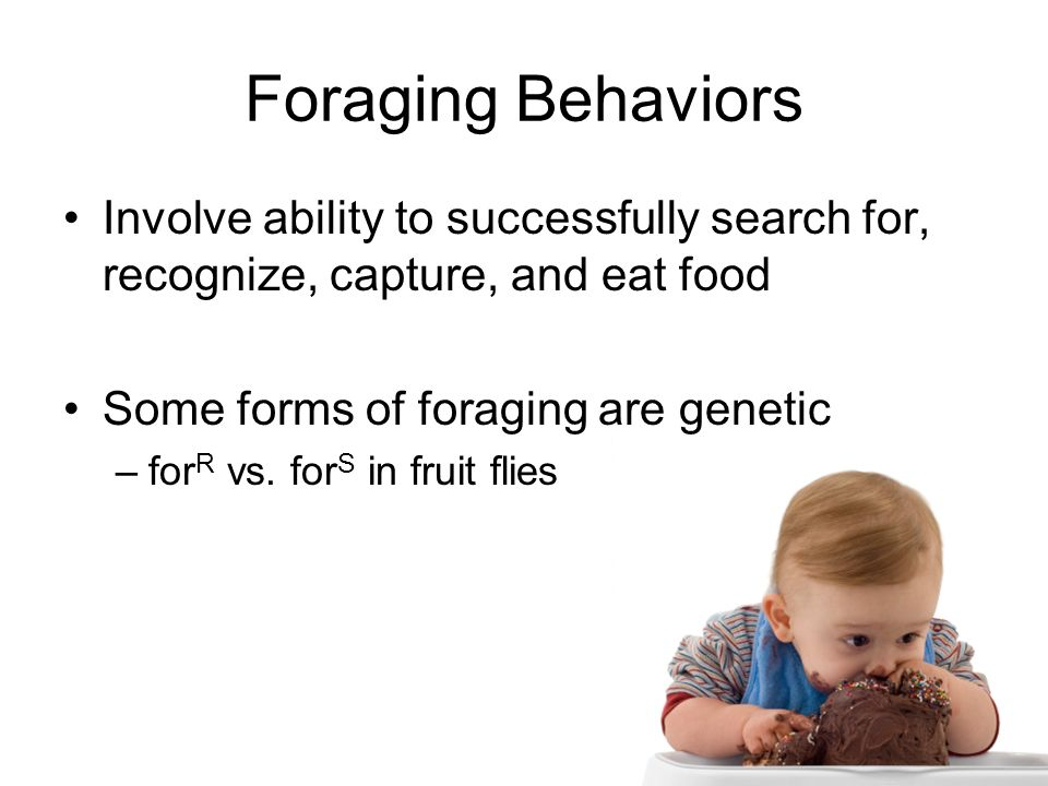 Foraging Behaviors Involve ability to successfully search for, recognize, capture, and eat food. Some forms of foraging are genetic.