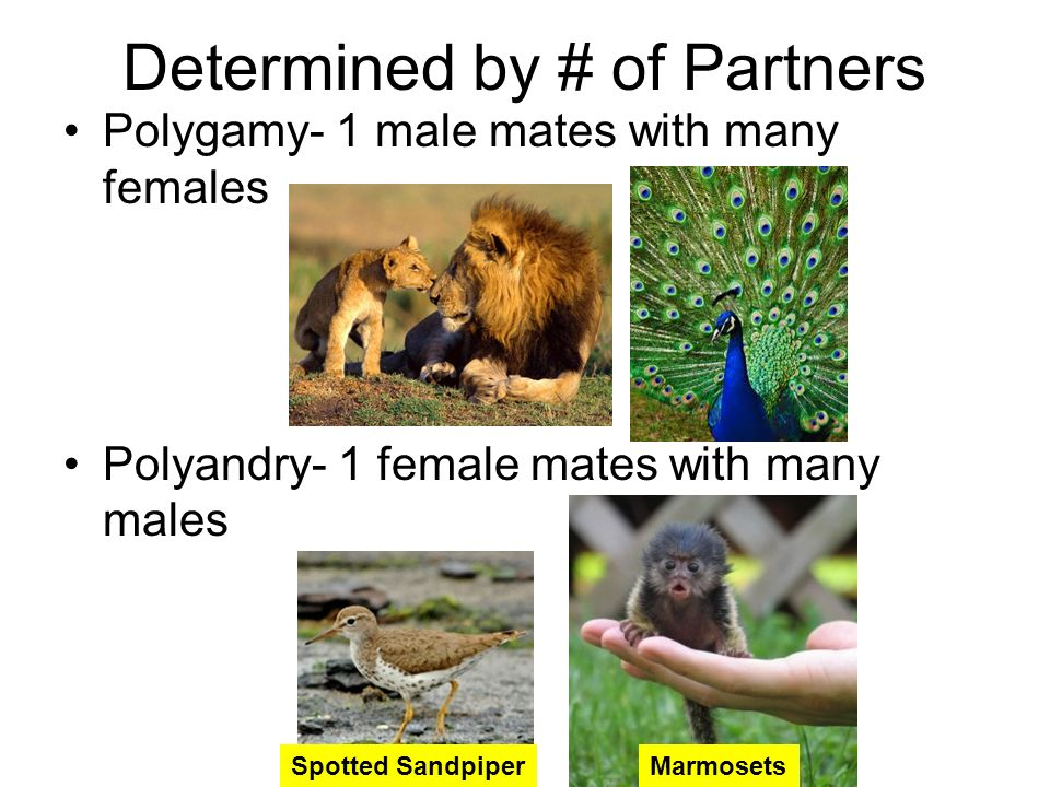 Determined by # of Partners