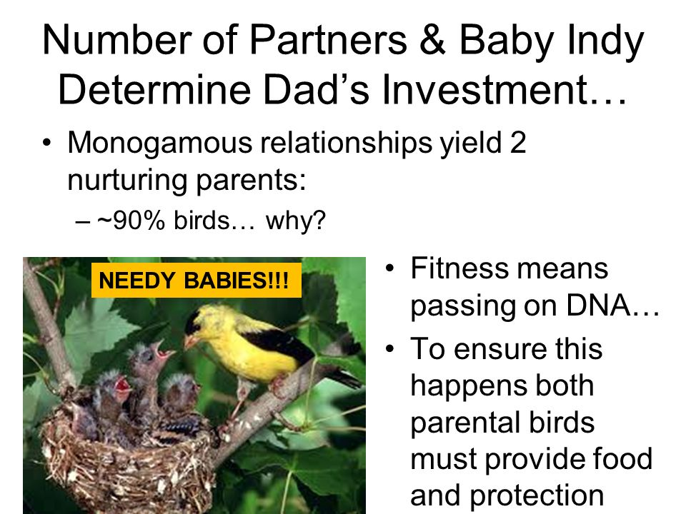 Number of Partners & Baby Indy Determine Dad's Investment…