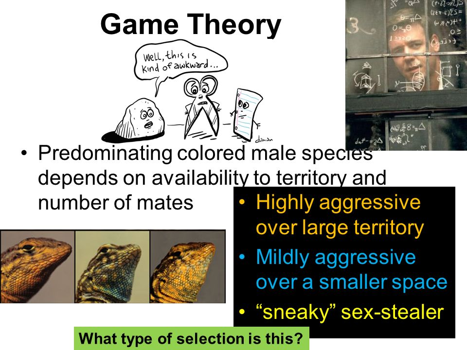 Game Theory Predominating colored male species depends on availability to territory and number of mates.