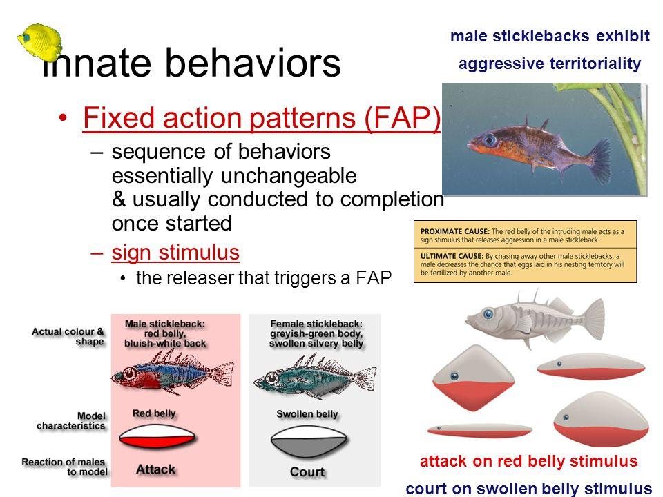 male sticklebacks exhibit aggressive territoriality