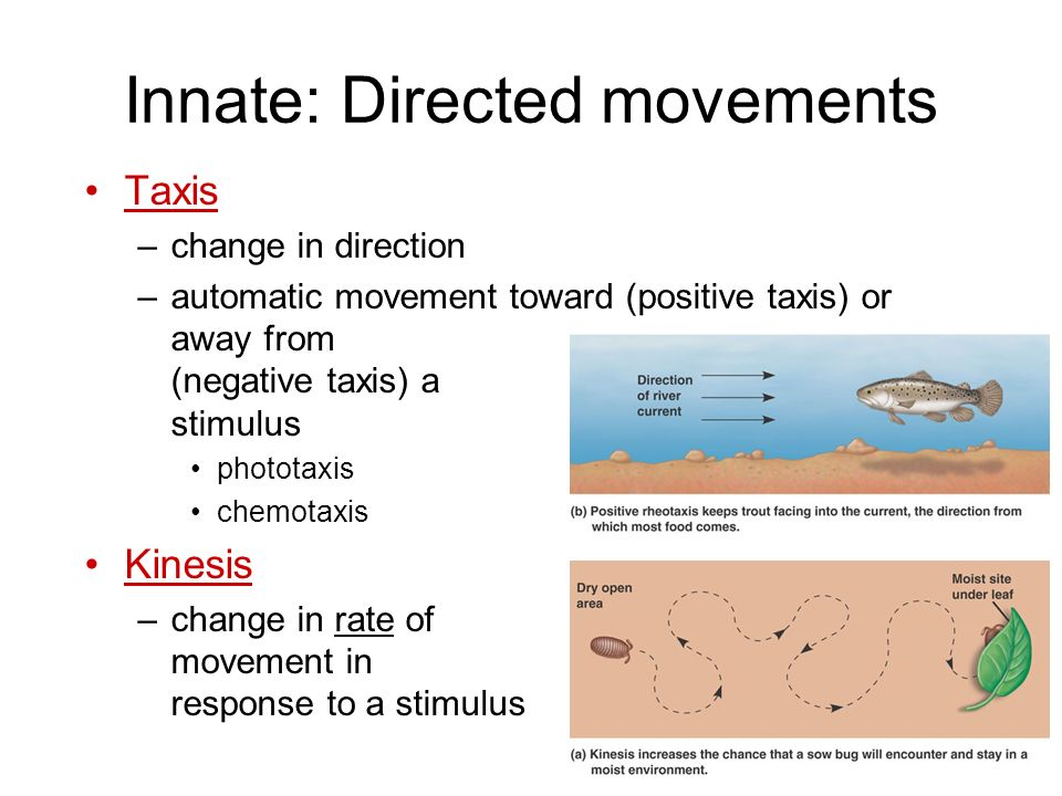 Innate: Directed movements