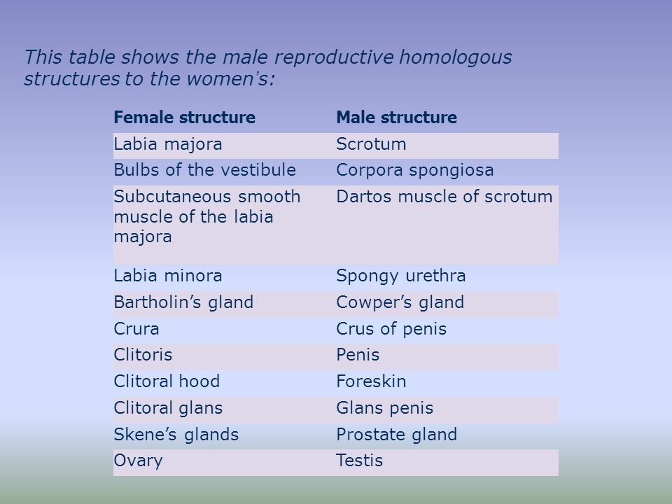 Homologous organ to vagina in males