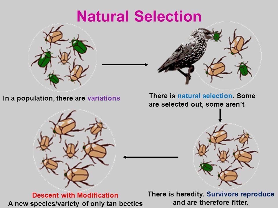 Natural Selection Moth Lab Allele