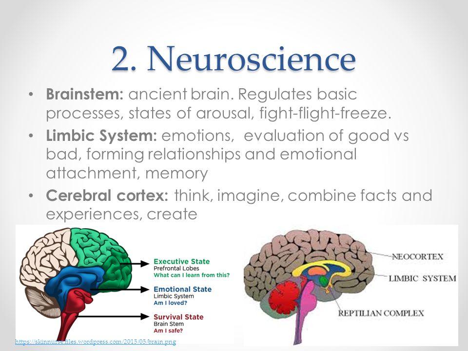 2. Neuroscience Brainstem: ancient brain. Regulates basic processes, states of arousal, fight-flight-freeze.