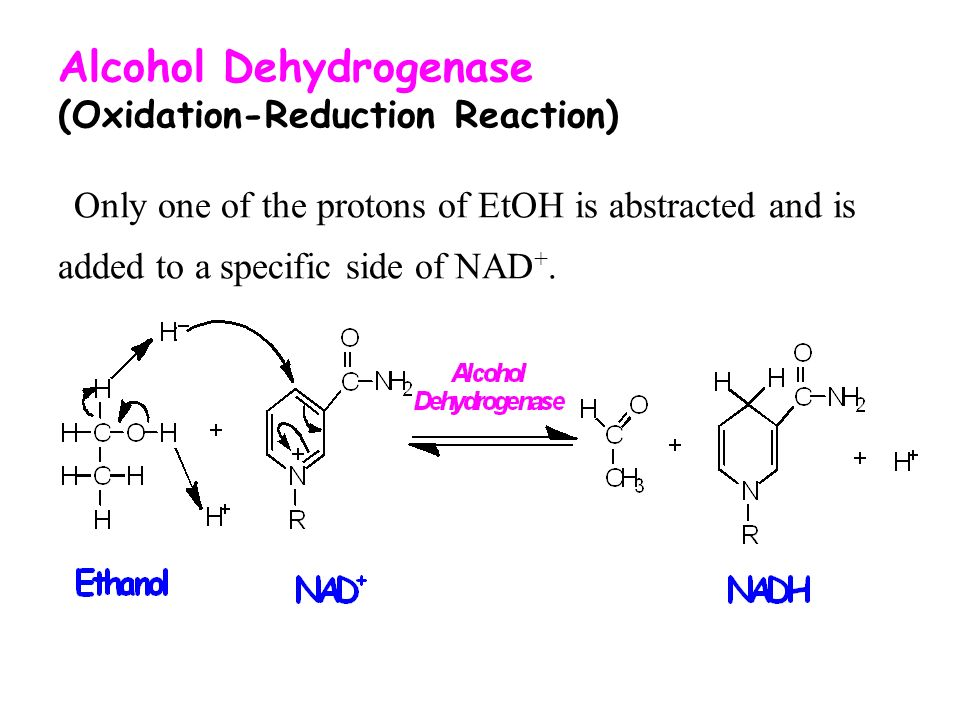 alcohol dehydrogenase from ethanol to acetaldehyde Alcohol dehydrogenase (adh) and aldehyde dehydrogenase (aldh) isozymes  using  blanks were run without ethanol and acetaldehyde to separate and.