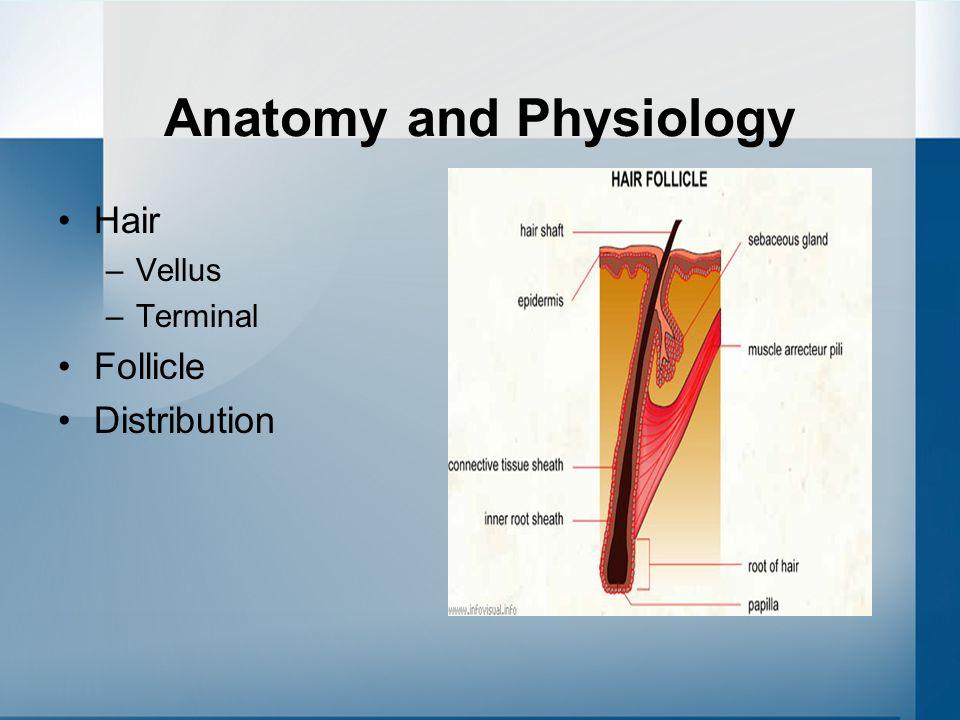 hair anatomy and physiology pdf