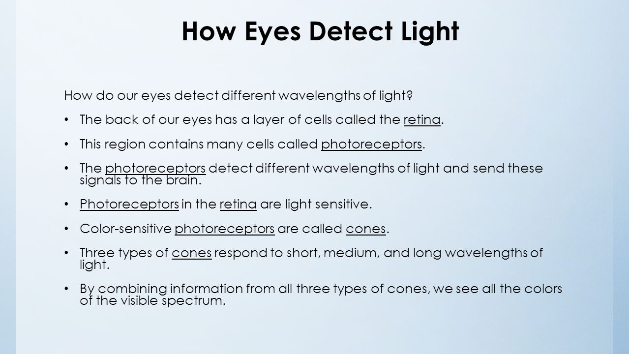 do we see with our eyes or brain I always appreciate updates on how exactly our brain works, especially in regard to brain functions and their impact on other parts of our body, such as eg our eyes and thus our eyesight.