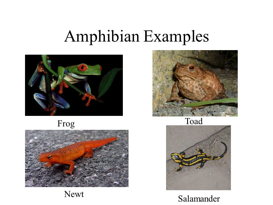 Animals Amphibians, Birds, Fish, Insects, Mammals, and ... 10 Examples Of Reptiles