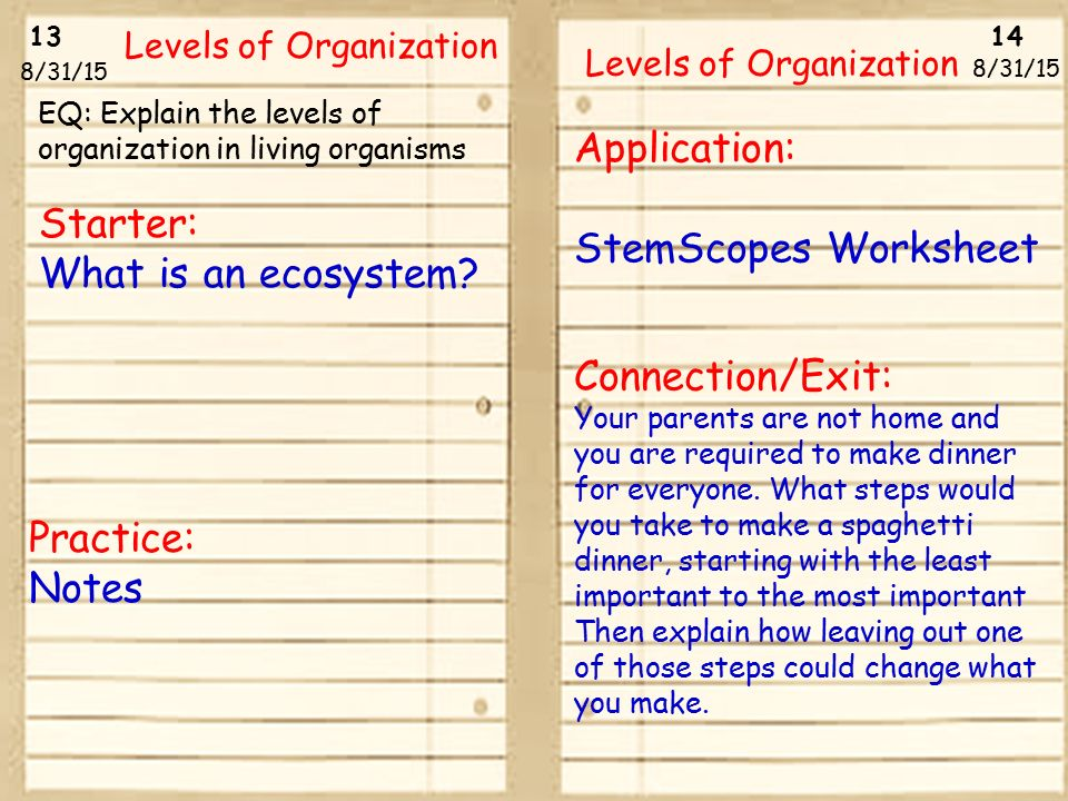 Starter What is an ecosystem Application StemScopes Worksheet – Levels of Organization Worksheet