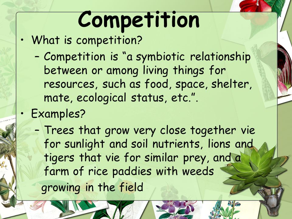 Starter what is an ecosystem application stemscopes for Definition of space in a relationship