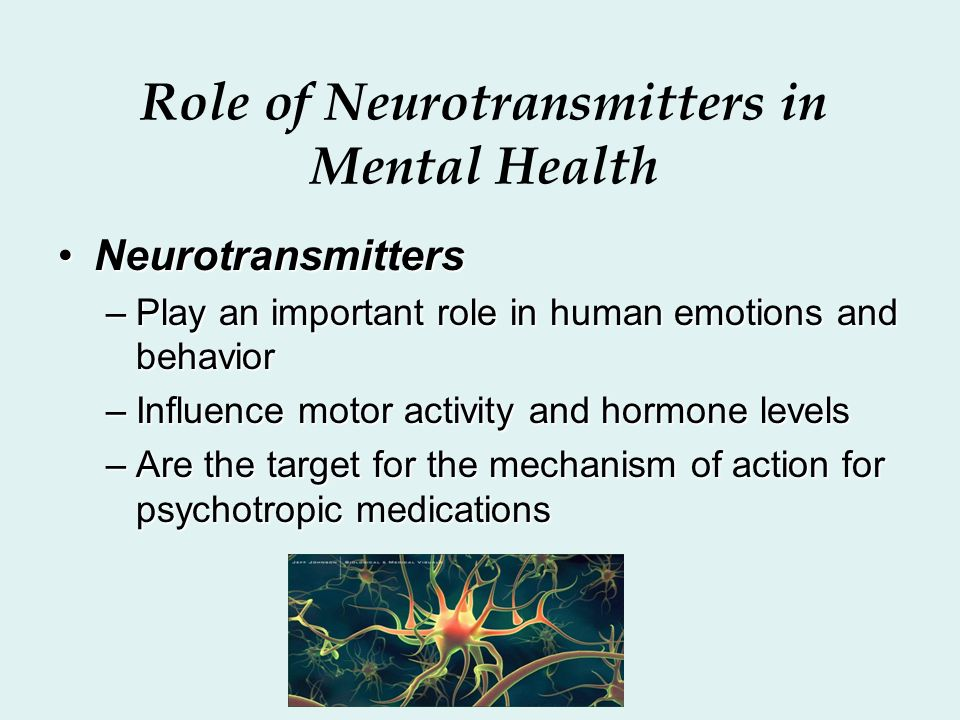 the role of neurotransmitters on aggression The neuron to which the neurotransmitters in the central nervous system, it is involved in wakefulness, attentiveness, anger, aggression, sexuality, and thirst, among other things norepinephrine plays a role in mood disorders such as manic depression.