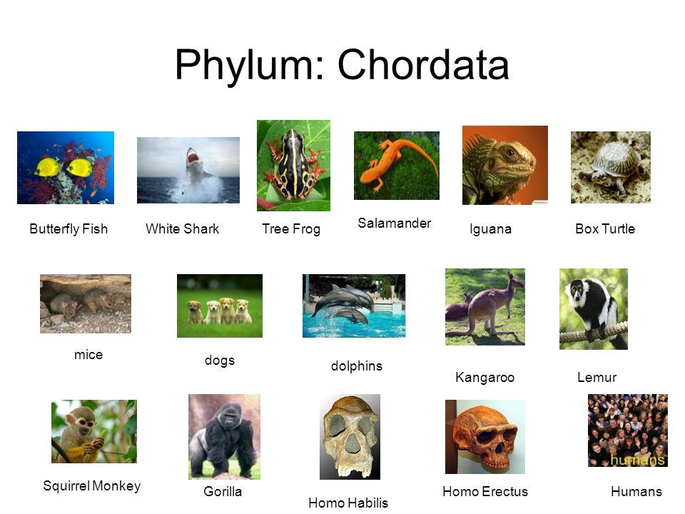 download Handbook of natural
