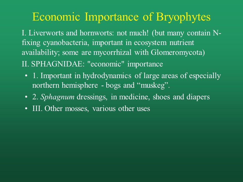 economic importance of cyanobacteria pdf