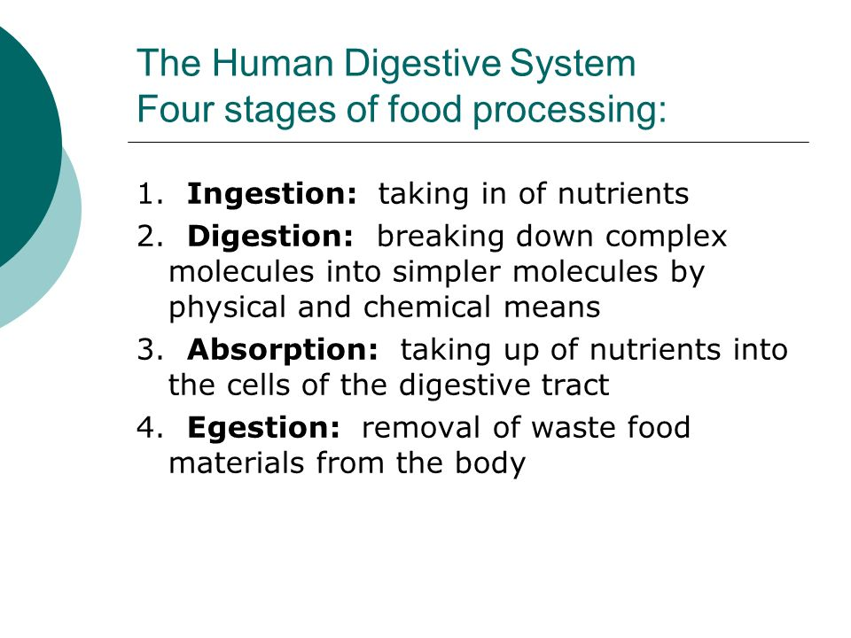 food processing in human body system The human digestive system (figure 422) or gi tract consists of the mouth,  the  process of digestion begins in the mouth where food is chewed and mixed with   obtained from the meal are absorbed by the small intestine into the body.