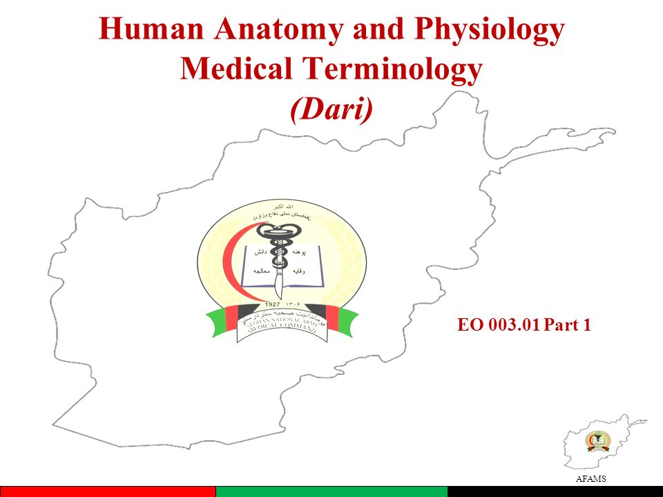 Human Anatomy And Physiology Medical Terminology Dari Ppt Video