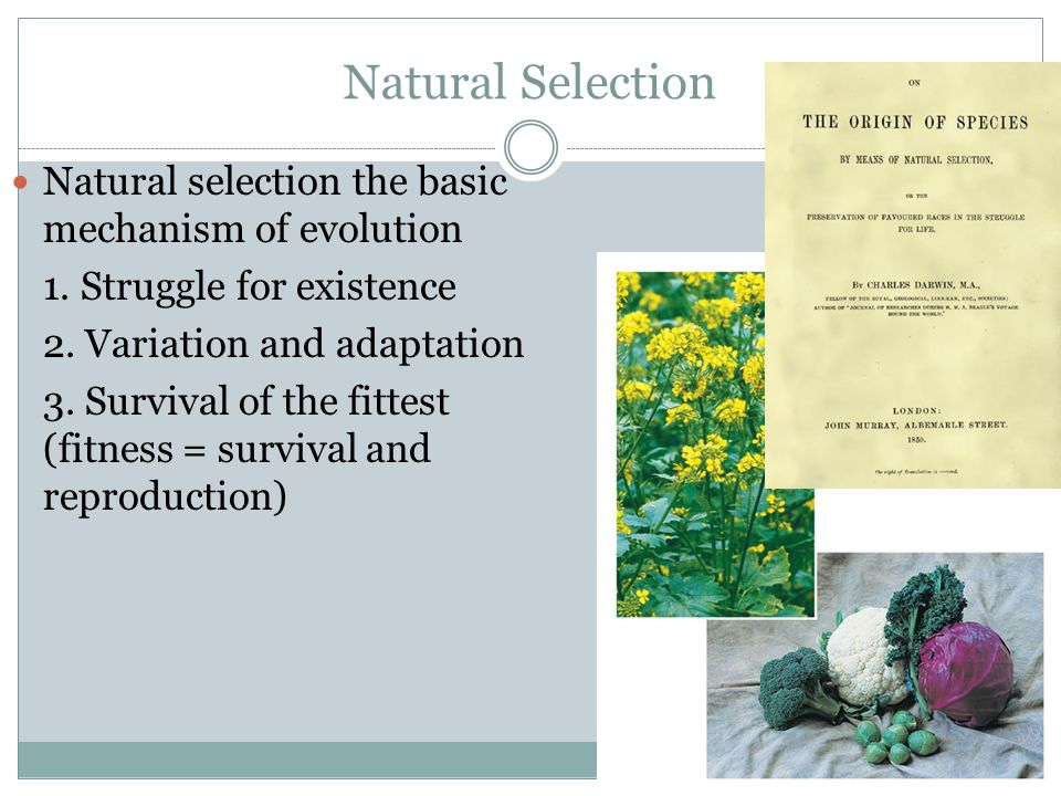 the natural selection to survival of the fittest Natural selection, in its simplest explanation, is the free choosing of mates within a mating community survival of the fittest is the action of natural selection.