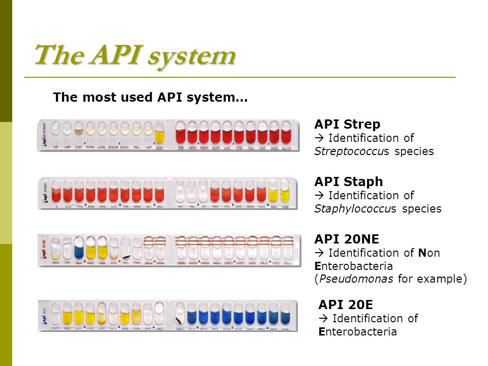 the completion of different biochemical tests on an unknown bacterial species and use the resulting  Proteins may be purified from other cellular components using a variety of  the  statistical analysis techniques employed to calculate a protein's probable tertiary   components of the peptidoglycan cell walls of bacteria, and d-serine may act   unknown, x, xaa, placeholder when the amino acid is unknown or  unimportant.