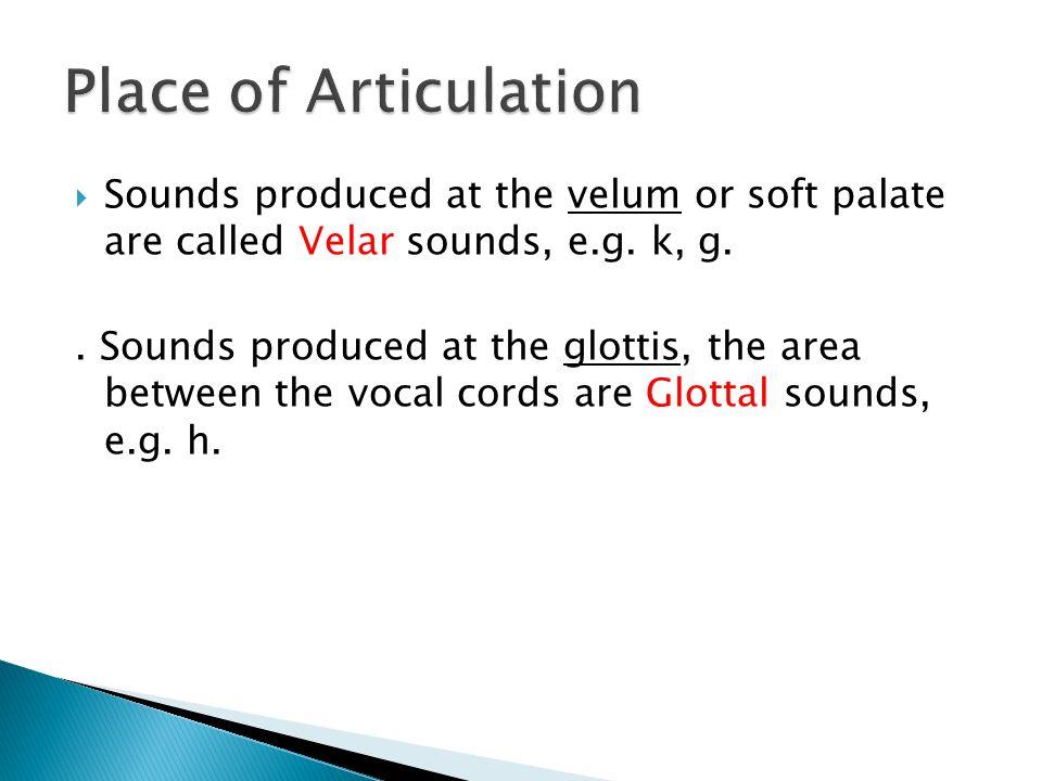 phonetics definition speech organs consonants vs  vowels