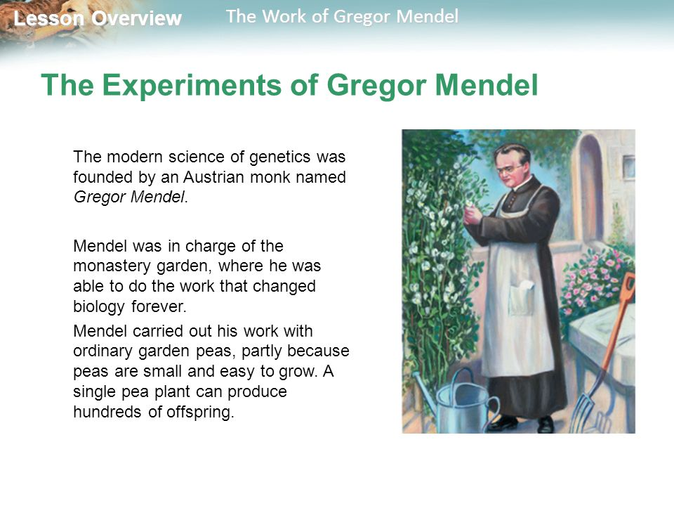 the work of gregor mendel biology Gregor mendel answer key 1 the basic laws of heredity were formed by an austrian monk named gregor mendel because his work laid the foundation to the study of.
