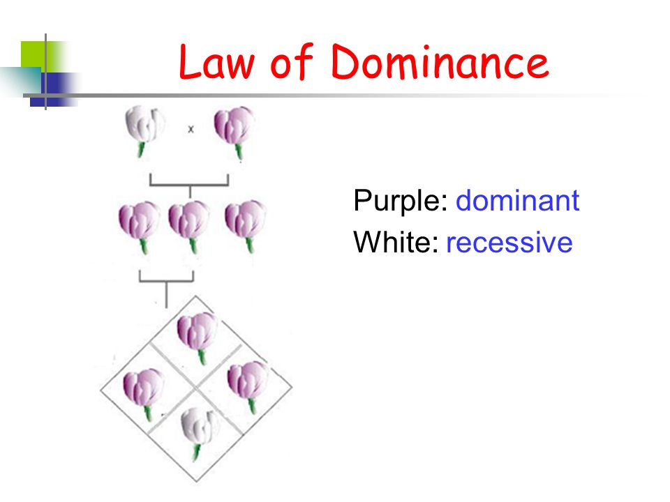 law of dominance - photo #11