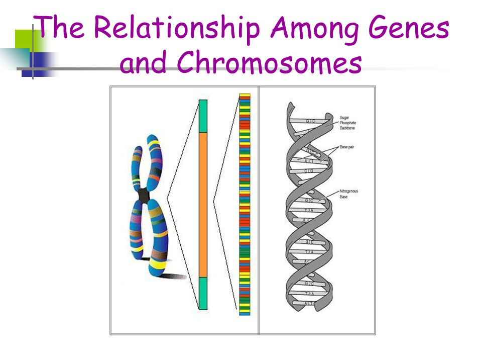 relationship among genes chromosomes and inherited traits