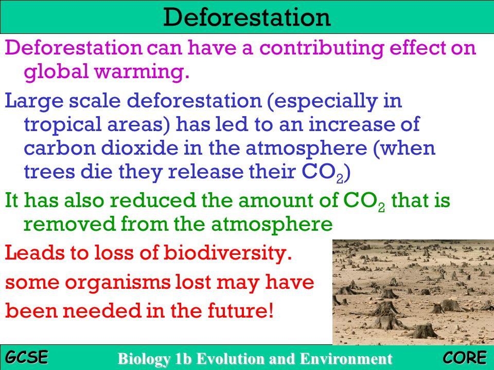 trees carbon dioxide and global warming Before compact fluorescent light bulbs and ethanol, the first line of defense against global warming was planting trees forests, after all, cool the atmosphere by drinking in carbon dioxide from the air.